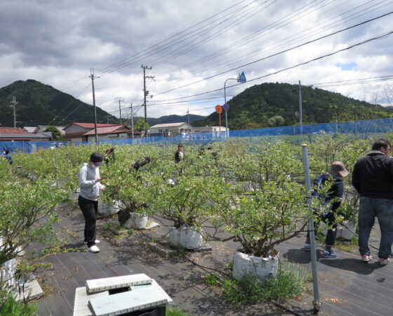 BB摘花作業とハチ観察会の報告