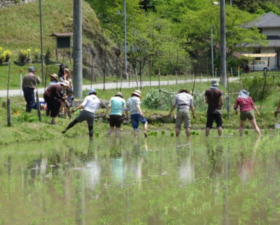 【猿結米】田植えイベント開催