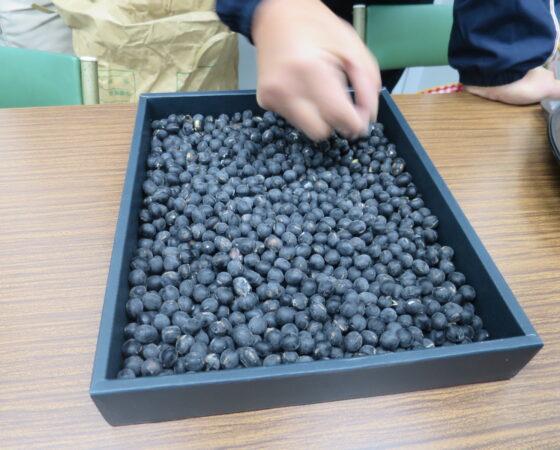 シカから守った黒豆で味噌作り