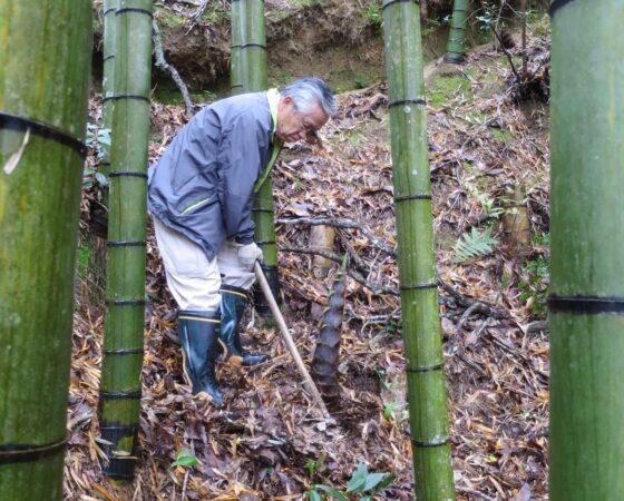 オトナの遠足 タケノコ掘り2017
