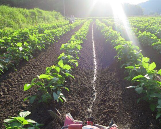 農作業とアイス!