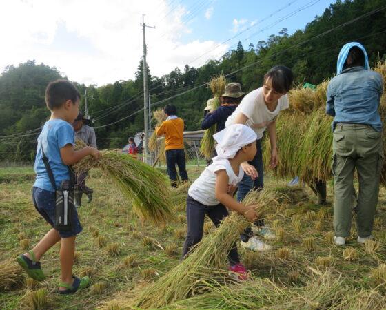 収穫イベントみんなで稲刈募集
