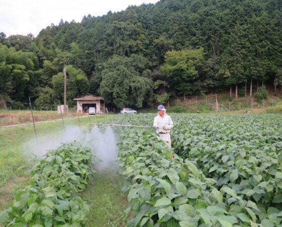 黒豆の消毒2