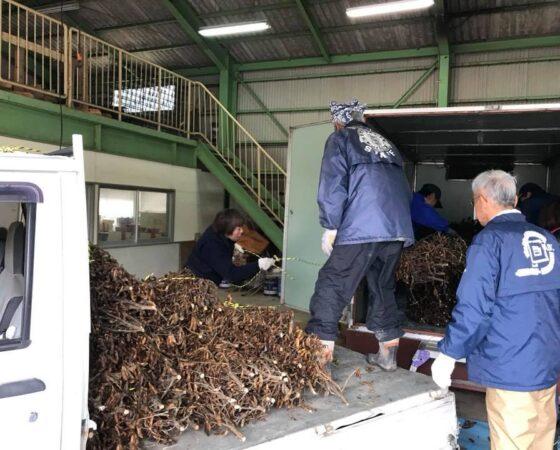 黒豆の乾燥作業
