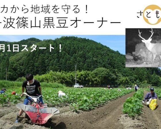 丹波篠山黒豆オーナー募集!