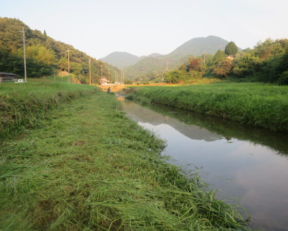 【猿結び米】草刈りをしました