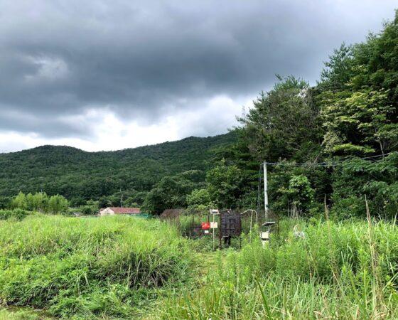 黒石地区で草刈り