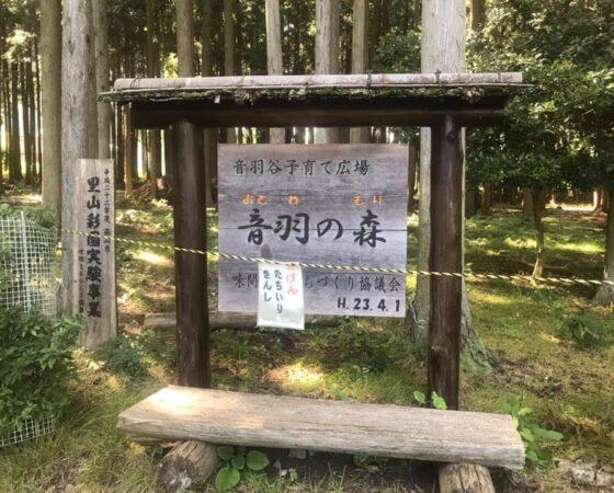 音羽の森の整備作業