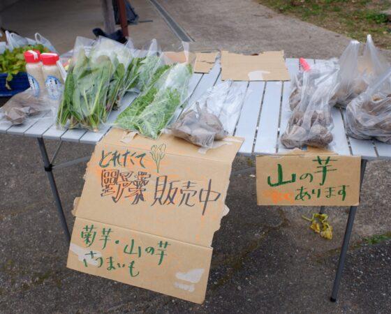 堆肥づくりの再開、野菜の販売