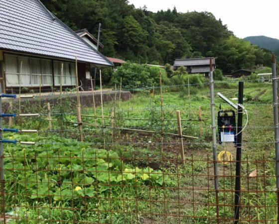 7月5日川阪OPF畑
