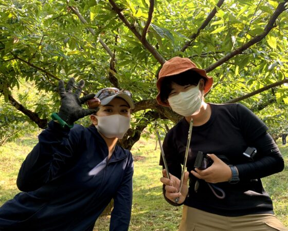 大学生が地域貢献!獣害から守った丹波栗の魅力発信